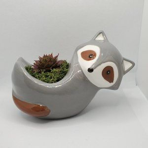 Other - Raccoon Animal Planter with Succulent
